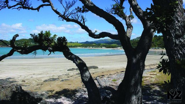 Oakura Bay (South)