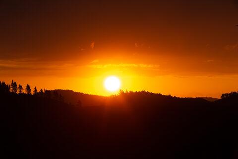 Sunset Frantoio Ridge