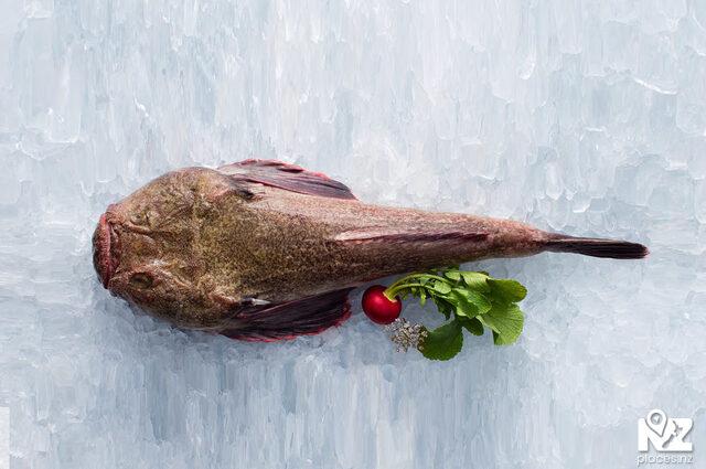 Giant Stargazer / Monk Fish